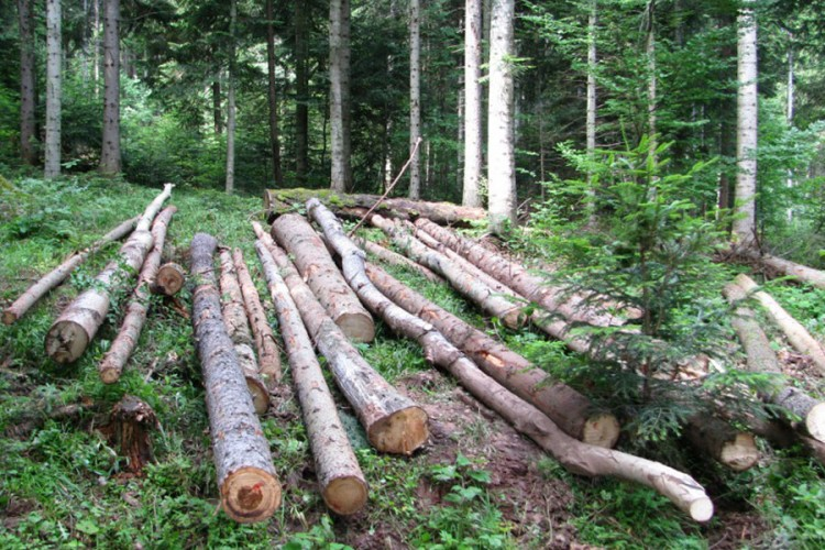 šume-ostavke.jpg
